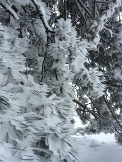 neige sapins